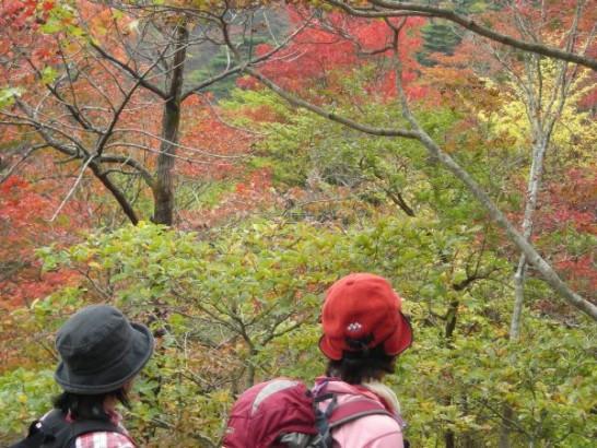 霧島の紅葉