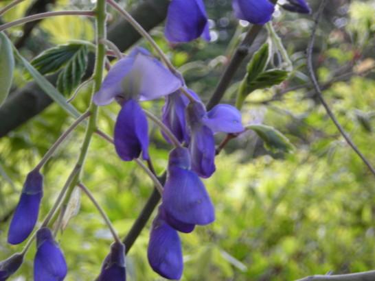 正岡 子規 短歌 藤 の 花