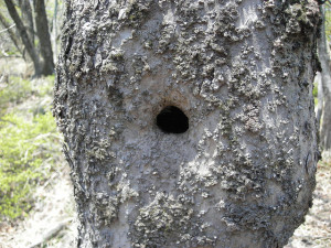 穴の開いた木