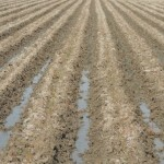 農地法3条申請