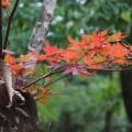 旅行人山荘 紅葉